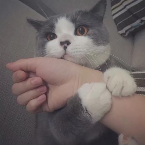 X。CAT